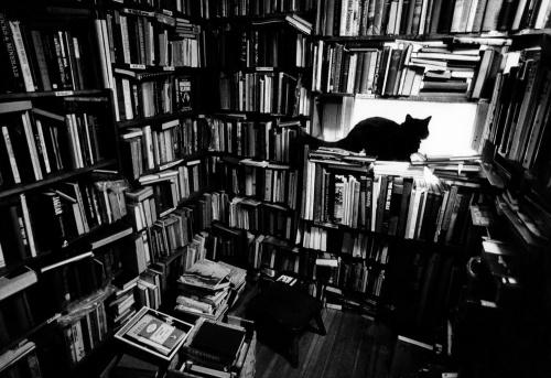 gat negre-llibreria