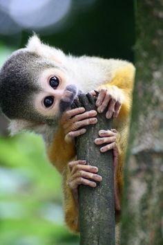 squirrel monkey-8
